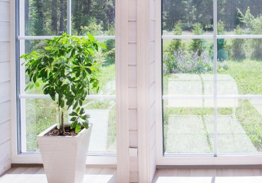 Small potted plant near clear and shiny window
